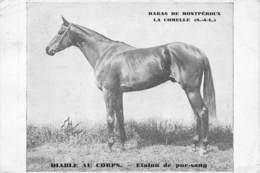 71-MONTPEROUX- HARAS DE MONTPEROUX- LA COMELLE , DIABLE AU CORPS, ETALON DE PUR-SANG - Andere Gemeenten