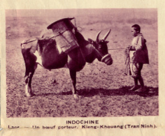 Chromo, Image, Vignette : Indochine, Laos, Un Boeuf Porteur, Kieng-Khouang, Tran-Ninh (6 Cm Sur 7 Cm) - Unclassified