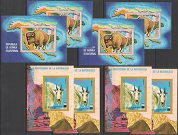 D305 !!! IMPERF,PERF GUINEA ECUATORIAL FAUNA ANIMALS PROTECTION NATURE 8BL MNH - Timbres