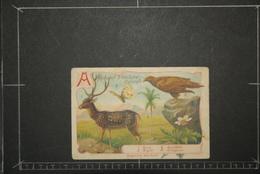 Chromos Et Images, Chromos Animaux  Alphabet D'Histoire Naturelle Lettre A Axis Aigle Apollon Aréquier - Unclassified