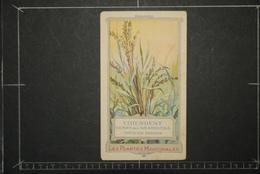 Chromos Et Images, Chromos Les Plantes Médicinales Le Chiendent Genre De Graminées Triticum Repens - Unclassified