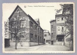 1954 ( VLOESBERG ) FLOBECQ - INSTITUT NOTRE-DAME - CLASSES PRIMAIRES - Flobecq - Vloesberg