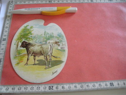 0689A  Liebig 689A, 1 Trade Card,  RRR, Types Of Cattle : JERSEY  Palette Shaped,  Advertising Litho LEMCO R3 C1901 - Liebig