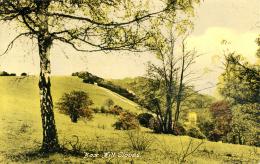 SURREY - BOX HILL SLOPES Sur372 - Surrey
