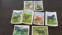 LOT  N° 304  / LOT DE 80 CPM  10 X 15    THEME CHEVAUX DE MERENS   NEUVES - Cartoline