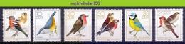 Mwe2637 FAUNA VOGELS MEES BLUE TIT ROBBIN BIRDS VÖGEL AVES OISEAUX GERMANY DDR 1979 PF/MNH - Zangvogels