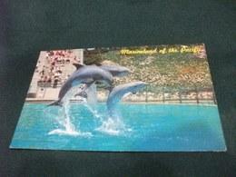 DELFINI DOLPHIN TRIO MARINELAND OF THE PACIFIC PIEGA - Delfini