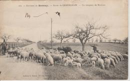 Bernay Route De Grandchain Troupeau De Moutons - Bernay