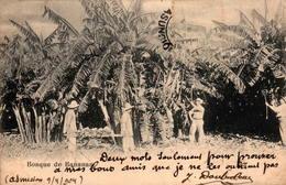 Paraguay - Bosque De Bananas - Paraguay