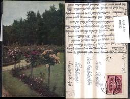 105512,Foto Ak Blumen Rosen Hochstamm I. Garten Parkanlage - Botanik