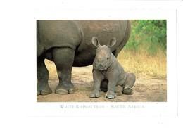 Cpm - White Rhinocéros - South Africa - - Rhinocéros