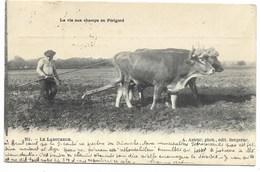 24-LA VIE AUX CHAMPS EN PERIGORD-Le Laboureur... 1904  Animé - Autres Communes