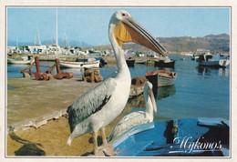 Postcard Greece Mykonos The Pelican Petro My Ref  B23103 - Greece
