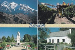 Postcard  New Zealand Blenheim Marlborough Grape Harvesting Seymour Square Cobb Cottage PU 1998 My Ref  B23108 - New Zealand