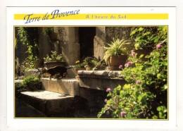 CP 10*15-EP1541-PROVENCE TERRASSE AU SOLEIL ET CHAT - Provence-Alpes-Côte D'Azur