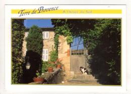 CP 10*15-EP1542-PROVENCE TERRASSE CHAT PORTE - Provence-Alpes-Côte D'Azur