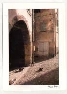 CP 10*15-EP1554-PROVENCE RUE ARCADE ET CHATS - Provence-Alpes-Côte D'Azur