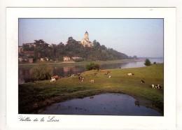 CP 10*15-EP1709-SAINT FLORENT LE VIEIL BORDS DE LOIRE TROUPEAU DE VACHES - France
