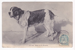 CPA - CHIEN - Chien Du St.Bernard - 3197 - Hunde