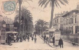 Hyeres Les Palmiers Avenue Des Palmiers - Hyeres
