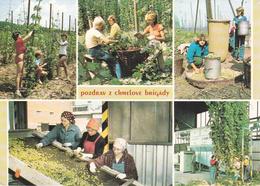 REPUBBLICA CECA - Pozdrav Z Chmelové Brigady - Coltivazione , Raccolta E Lavorazione Del Luppolo - Birra / Beer / Bier - Czech Republic