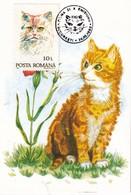 ROUMANIE  CARTE MAXIMUM THEME CHAT - Katten