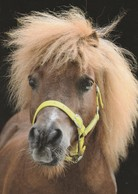 VERY SHAGGY MANE , LOVELY - Pferde
