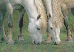 BEAUTIFUL 2 GREY HORSES GRAZING TOGETHER - Pferde