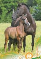 BEAUTIFUL MARE WITH HER FOAL - Pferde