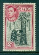 Ceylon 1938-52 KGVI Tapping Rubber 2c Perf 11.5x13 MLH Lot82464 - Sri Lanka (Ceylon) (1948-...)