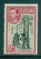 Ceylon 1938-52 KGVI Tapping Rubber 2c Perf 13.5x13 MLH Lot82465 - Sri Lanka (Ceylon) (1948-...)