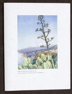 Collezionismo - Menu Navi - LLOYD Triestino - Mn. Australia - 4 Giugno 1954 - Menus