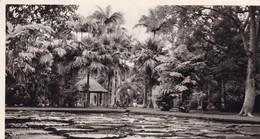 MAURICE / JARDIN BOTANIQUE DES PAMPLEMOUSSES / CIRC 1954 - Mauritius