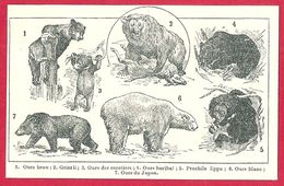 Ours, Ours Brun, Ours Des Cocotiers, Ours Baribal, Prochile Lippu, Ours Blanc, Ours Du Japon, Larousse 1908 - Old Paper