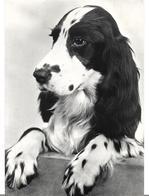 ~ JP  ~    CHIENS    ~  STRUPARKE POPSIE - Dogs