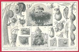 Nids, Nid D'écureuil Des Philippines, De Souris Des Moissons, De Textor, De Tisserin, De Rousserolle..., Larousse 1908 - Old Paper