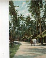 MALAISIE(PENANG) - Malaysia