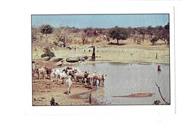 Cpm - Pitmoaga Commune Au Burkina Faso - La Route Du Coeur - Le Manguier - Troupeau De Vaches Vache - Burkina Faso