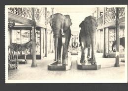 Koninklijk Belgisch Insituut Voor Natuurwetenschappen - Zaal Der Zoogdieren En Vogels - Olifant, Zebra, Neushoorndier - Animaux & Faune