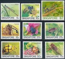 Singapore  Insecten - Insekten