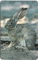 Oman - Chip - Wild Rabbit - Animals - 05.2002, 200.000ex, Used - Oman
