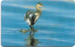 Oman - Chip - Little Grebe - Birds - 05.2002, 400.000ex, Used - Oman