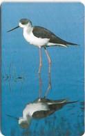 Oman - Chip - Black-winged Stilt - Birds - 05.2002, 400.000ex, Used - Oman