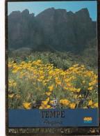 Arizona Tempe Landscape Scene - Tempe