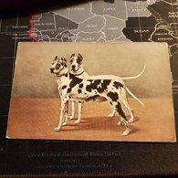 Peintures 2 Chiens (D) - Perros