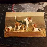 Peintures - 3 Chiens (1917) (D) - Perros