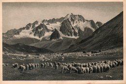 - HAUTES-ALPES. - La Grave. - Troupeau De Moutons - Scan Verso - - Francia