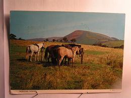 Ecrite à Bangor - Trekking Ponies - Pays De Galles
