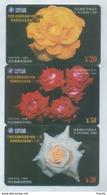 China,flower,Rose Flowers - China
