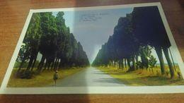 Cartolina:Bolgheri Viale Dei Cipressi Viaggiata (a9) - Cartoline